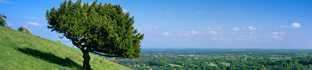 Box Hill, Surrey Hills